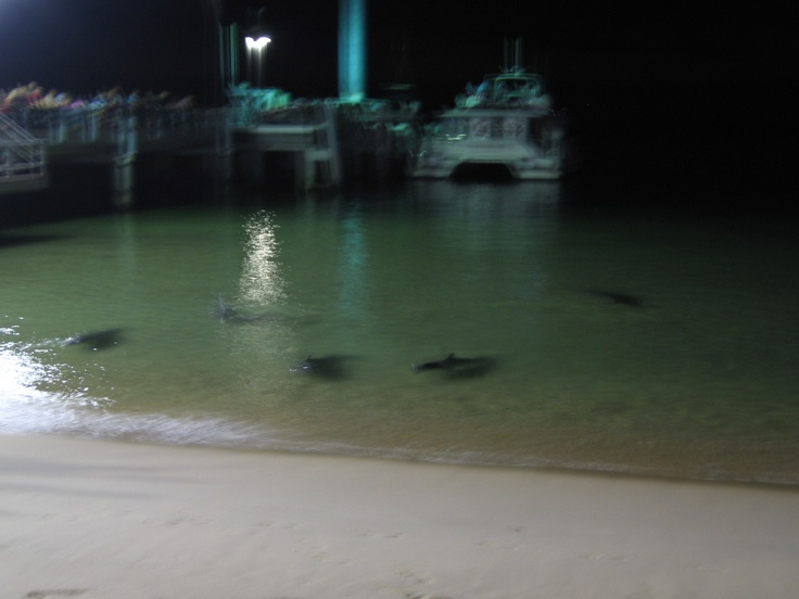 Wild dolphin feeding time at Tangalooma Resort on Moreton Island