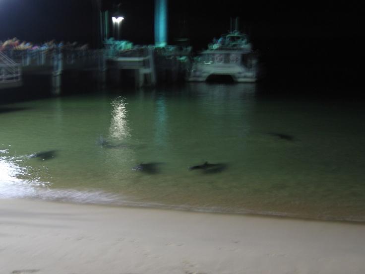 Wild dolphin feeding time at Tangalooma Resort on Moreton Island