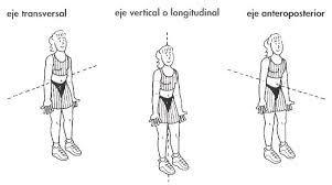 EJES ANATÓMICOS EJE TRANSVERSAL.-Corresponde al eje x de las coordenadas es paralelo al suelo.(Movimientos de flexión o extensión) EJE LONGITUDINAL O VERTICAL.-Corresponde al eje y de las coordenadas es perpendicular al suelo (movimientos de rotación)  EJE SAGITAL O ANTE POSTERIOR.-Corresponde a un eje z  es perpendicular a los dos anteriores(movimientos de  abducción y aducción)