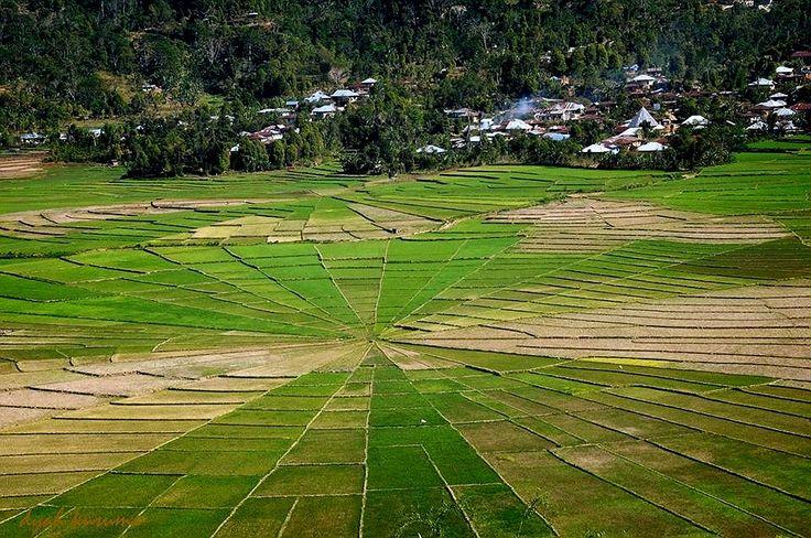 spiderweb rice fields, Manggarai Flores, Indonesia