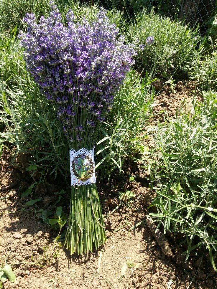 bride's lavender bouquet