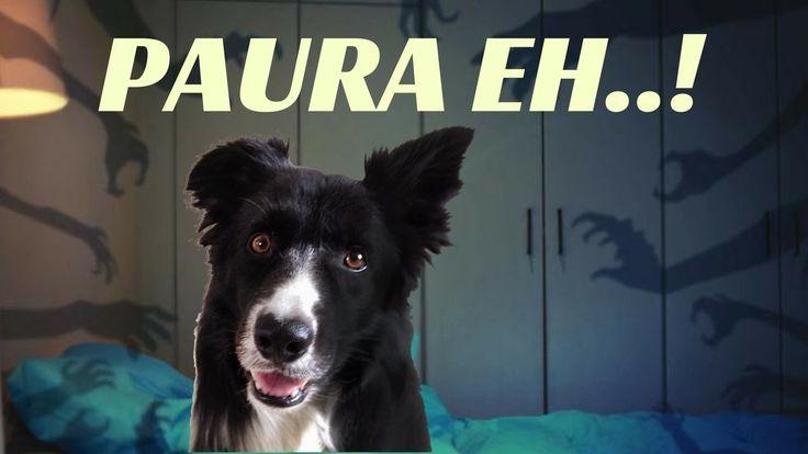 Come far passare la PAURA al tuo cane