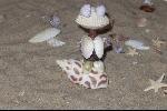 figuurtjes van schelpen maken - little schelf animals