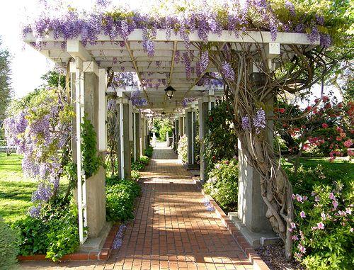 Best 25 Wisteria Arbor Ideas On Pinterest Wisteria