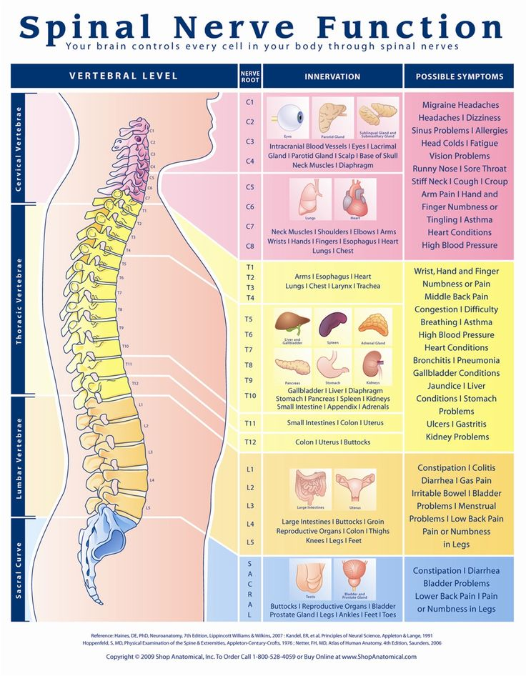 best 25+ nerves function ideas on pinterest | spinal nerve, Cephalic Vein