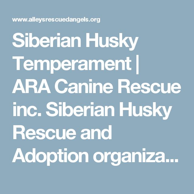 Siberian Husky Temperament | ARA Canine Rescue inc. Siberian Husky Rescue and Adoption organization