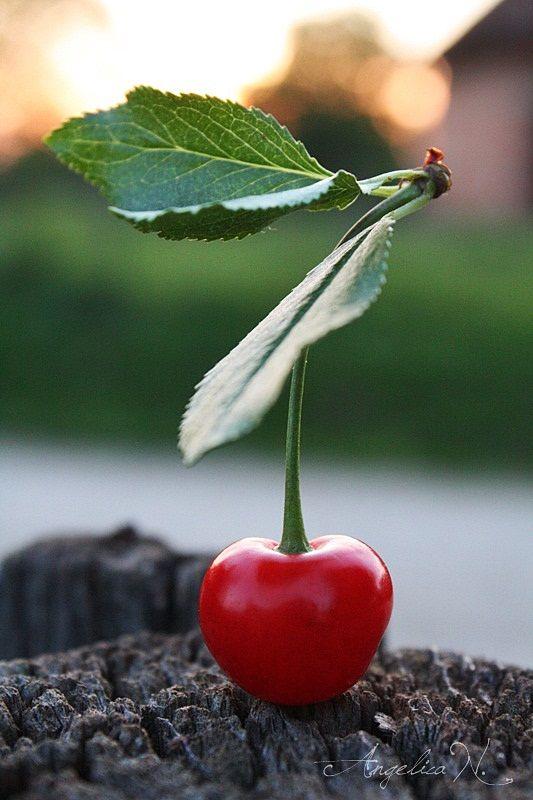 Frumoasa viata la tara...fructe de iunie-iulie:-)