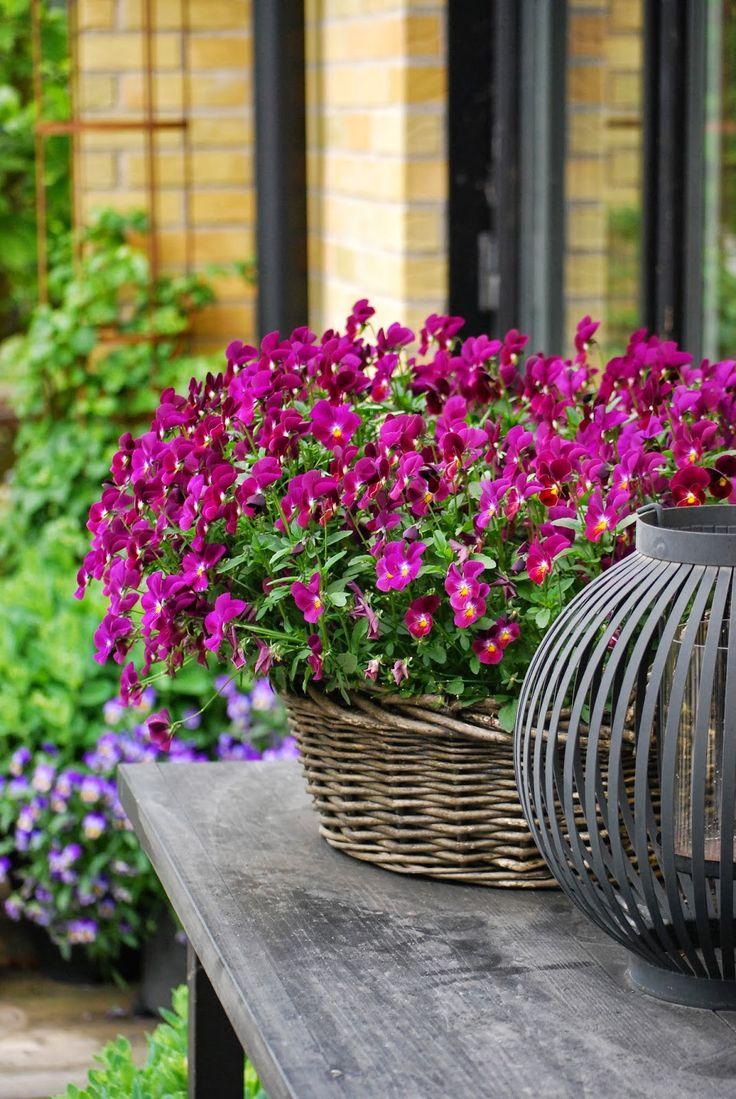 1043 best garden ~ container images on pinterest | flowers, garden