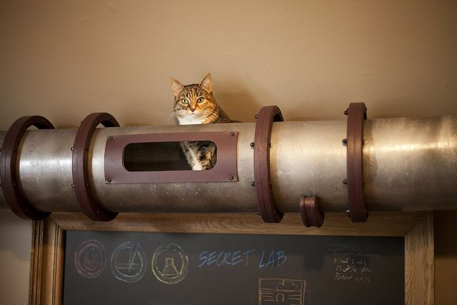 Cats and tube, like the money delivery system, this is for cats. But don't worry, its not pressurised.