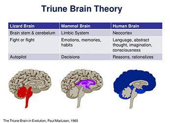 Triune Brain Theory