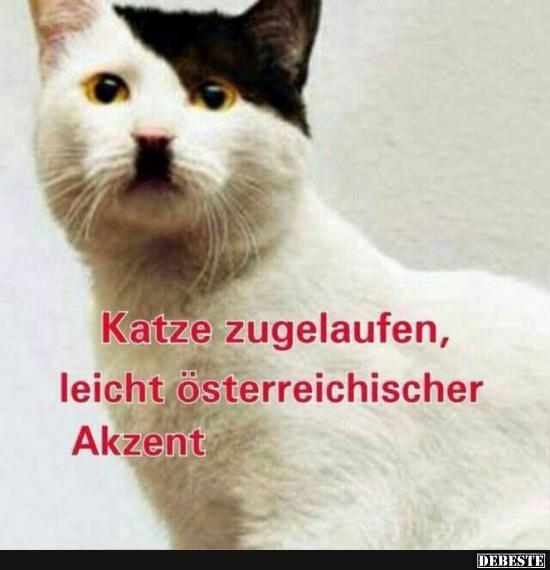 Katze zugelaufen, leicht österreichischer Akzent.. | Lustige Bilder, Sprüche, Witze, echt lustig