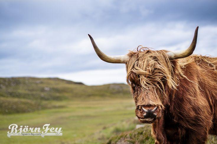 Highland Rind