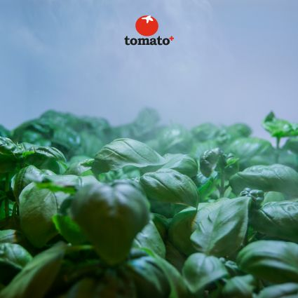 A wellness cloud.Tomato + technology controls the water vapor to the plants, to grow them in the ideal microclimate