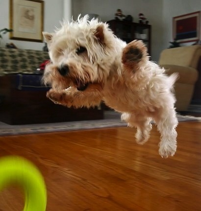 Flap Those Paws AND FLY!!! lol
