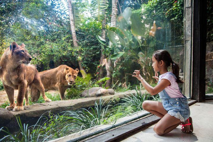 Wana Restaurant Bali Zoo, lion view
