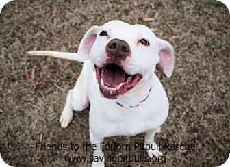 Pictures of Shelby a American Pit Bull Terrier Mix for adoption in Dallas, GA who needs a loving home.