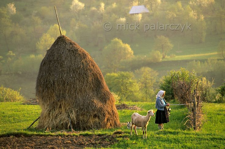 Rural Romania: Wolf People in Sheep's Clothing - Smit & Palarczyk