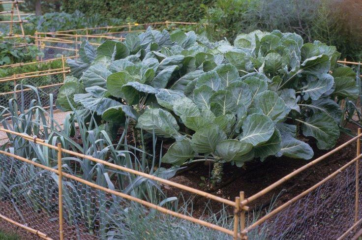24 best images about vegetable garden on pinterest for Elegant vegetable garden