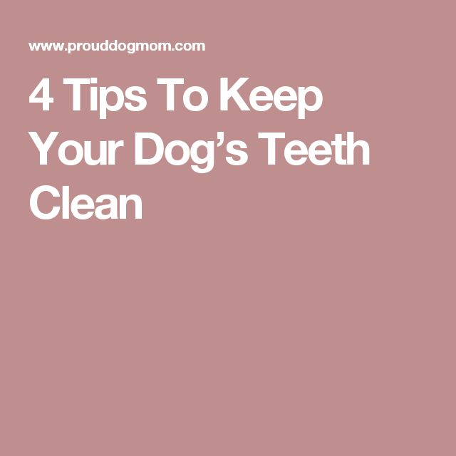 4 Tips To Keep Your Dog's Teeth Clean