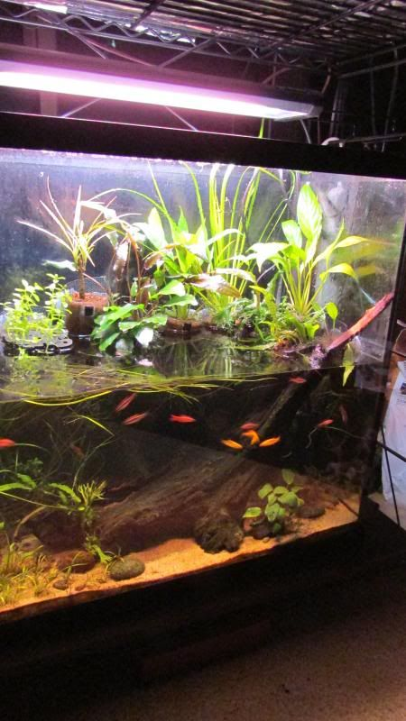 30 gallon tall riparium Canister filter all the way.  Perhaps a 40 tall instead. Half water half land.