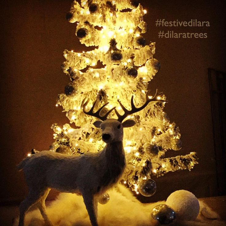 D'lara Chocolate & Events — Keep Calm and Decorate Your Tree With d'lara ...