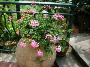 #Comepulire i vasi dei fiori