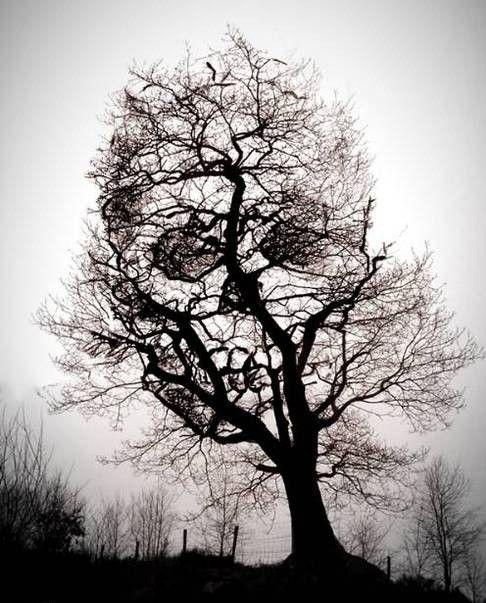 es  un árbol y también una calavera mírenla bien