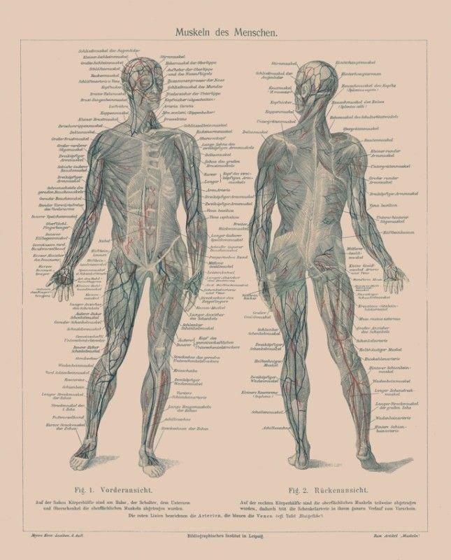 39 best A&P HELP! images on Pinterest | Human body, Health and Human ...