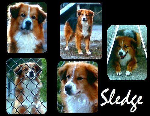 Sledge, a mutt from Homeward Bound II: Lost in San ...