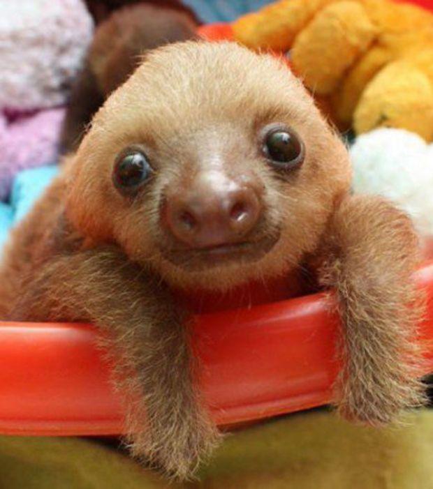 Resultado de imagem para bebe preguiça