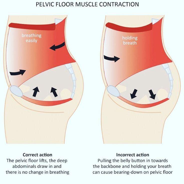 The Importance of the Pelvic Floor Pelvic floor, Soft