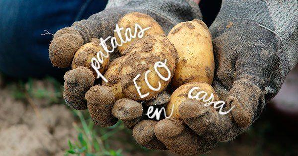 M s de 25 ideas incre bles sobre plantar patatas solo en for Como cultivar patatas