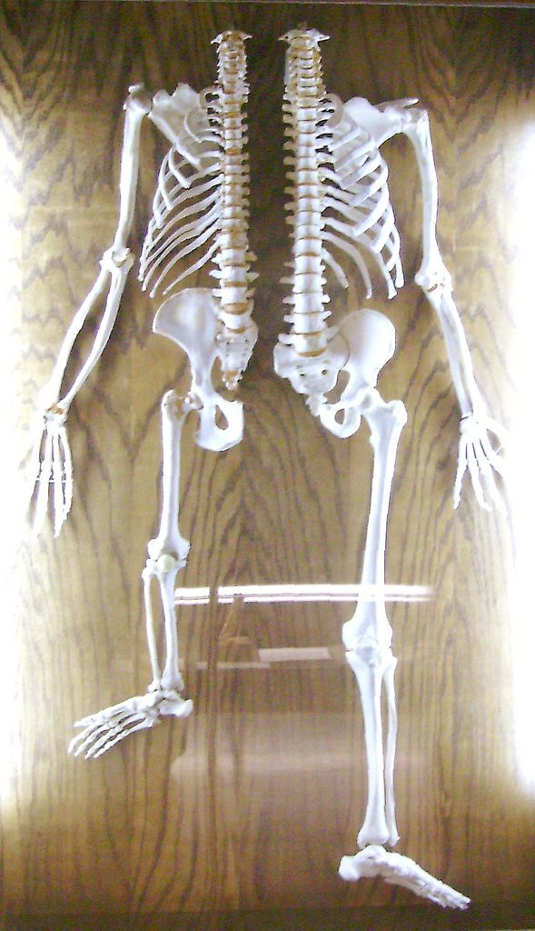 Which Skeleton Is Yours? in 2019   Primates   Skeleton ...