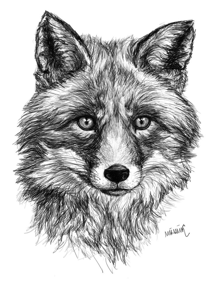 Fox by Lilla Mihalik  https://www.facebook.com/lillamihalikart?ref=aymt_homepage_panel