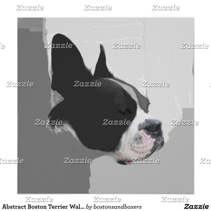 Abstract Boston Terrier Wall Art