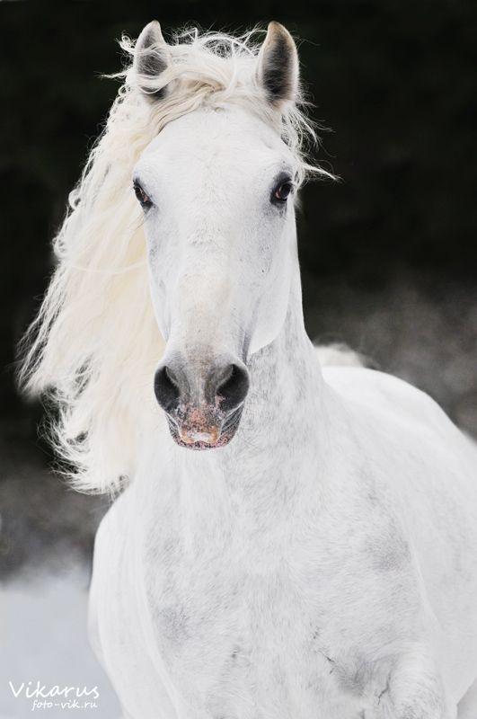 Horse Bedroom Pinterest