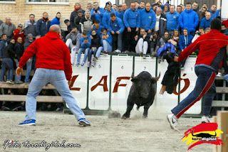 torodigital: Castellnovo pone el cartel de lleno