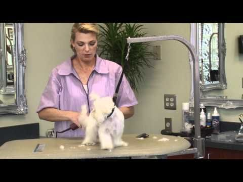 Grooming a Maltese Puppy with Courtney Ramstack ~ 1:50 minutes shaver was much quieter and maltese was shaped nice with furrier legs. Looks like she is selling DVD how to groom dogs