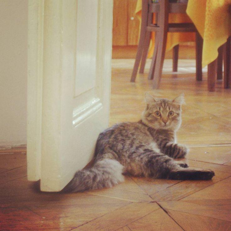 Friend's cat #cat #timetorelax #cats #catlover