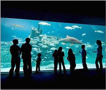 Nc Aquarium Fort Fisher Wilmington Calling North Carolina Home In 2018 Pinterest Atlantic Beach And