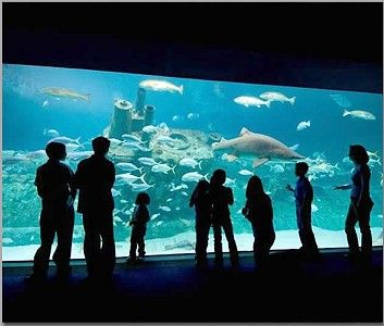 NC Aquarium, Fort Fisher, Wilmington, NC