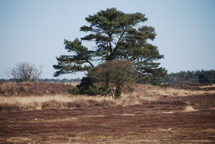Heide, Hilversum, The Netherlands