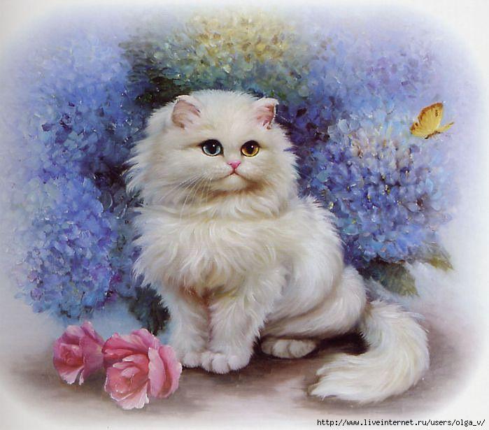 Кот для открытки, картинки