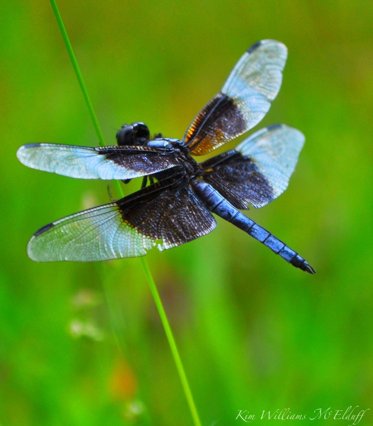 Dragonfly: Dragonfly Mania, Dragonfly Mi Spirit, Dragonflies Mi Spirit, Album, Dragonfly Dreams, Dragonfly You R, Dragonflies You Re, God Creatures, 287 Photo