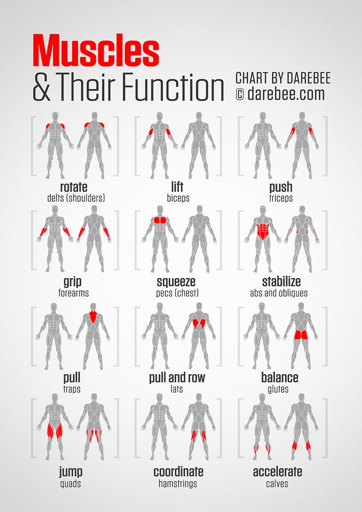 Muscles and Their Function