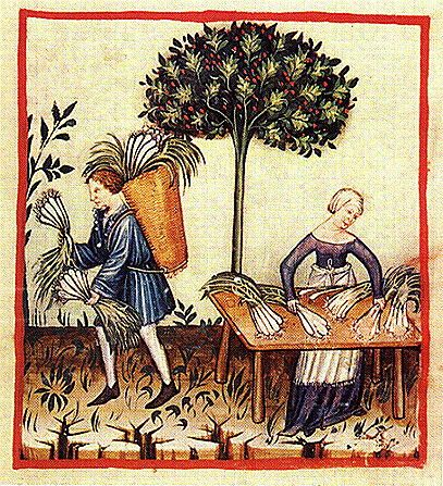 Harvesting Leeks. Notice the basket on his back and her apron with a fringe end.