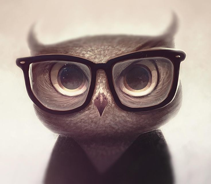owl in glasses by Vincent Hachen