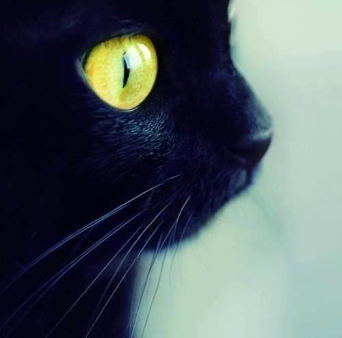 L'uomo vuol essere pesce e uccello,  il serpente vorrebbe avere ali,  il cane è un leone spaesato,  l'ingegnere vuol essere poeta,  la mosca studia per rondine,  il poeta cerca di imitare la mosca,  ma il gatto vuole solo esser gatto  ed ogni gatto è gatto dai baffi alla coda,  dal fiuto al topo vivo,  dalla notte fino ai suoi occhi d'oro.     (Pablo Neruda)