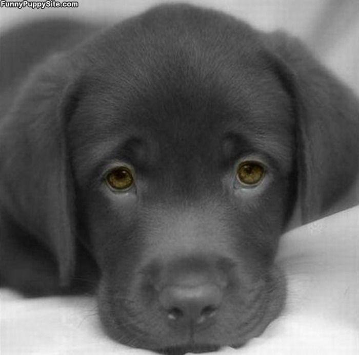 What a cute face...