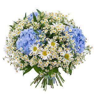 """Букет цветов """"Синие глазки"""" цена - Ромашки <- Букеты из цветов <- Цветы…"""